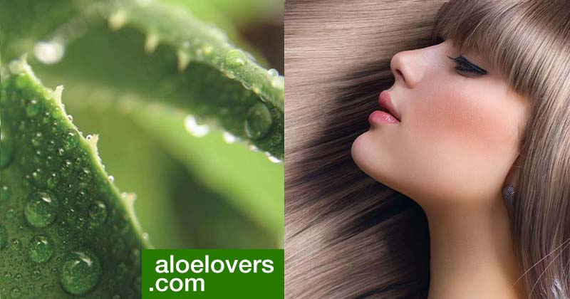 Aloe Vera per la salute e il benessere dei capelli