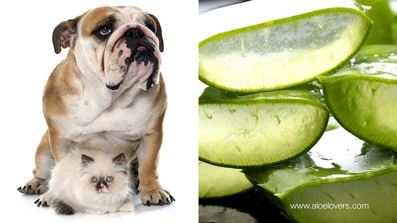 Aloe Vera per la salute degli animali