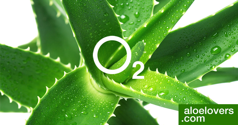 Aloe Vera per purificare l'aria e dormire meglio