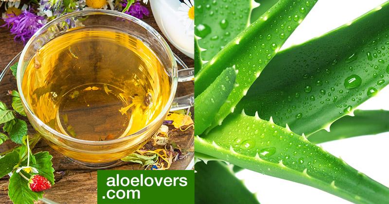 Tisana di Aloe Vera per depurare il corpo e ritrovare il benessere