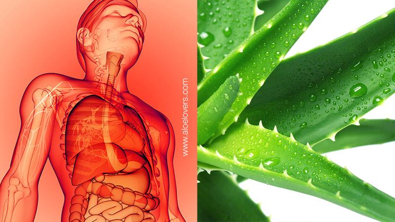 L'Aloe Vera per abbassare la temperatura corporea