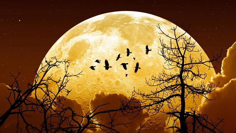Quello che devi sapere sulla Superluna e la tua salute