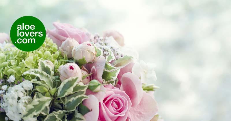 dimagrire-per-il-matrimonio-aloe-vera-bouquet-aloelovers