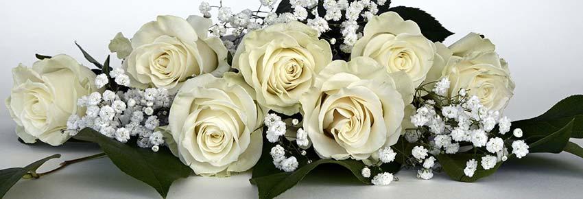 rose-aloelovers
